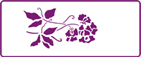 350 mm x 140 mm Border Stencil Sweet Peas